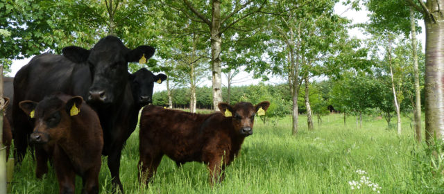 Agroforestry for livestock systems