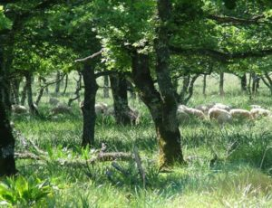 wp2_i_grazed_oak_woodlands_system_description