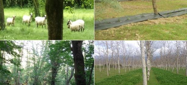 Agroforestry for High Value Trees: Synthesis of System Descriptions
