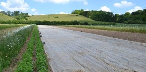 Silvoarable Agroforestry in the UK 2
