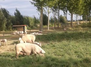 wp5_i_free_range_pigs_system_description