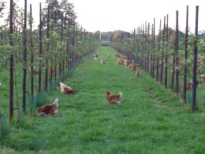 wp5_nl_organic_eggs_system_description