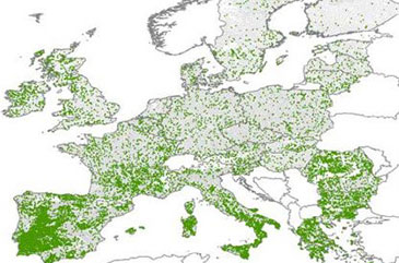 Current extent and trends of agroforestry in the EU27