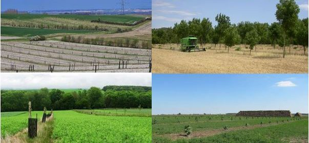 Agroforestry for Arable Systems: Synthesis of System Descriptions