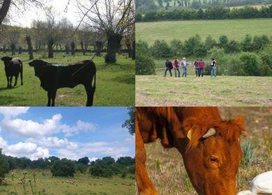Agroforestry of High Nature and Cultural Value: Synthesis of System Descriptions