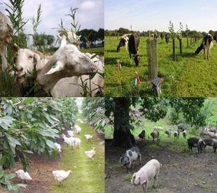 Agroforestry for Livestock Farmers: Synthesis of System Descriptions