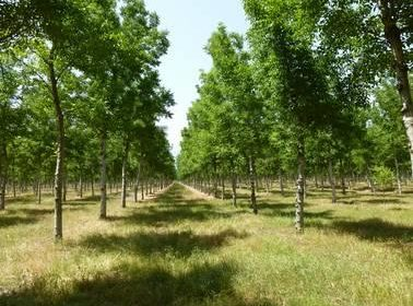 Silvopastoral Management for Quality Wood Production in Spain