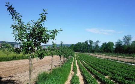 Silvoarable agroforestry in Switzerland
