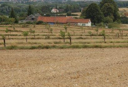 Weed Survey   in Northern Silvoarable Group in France