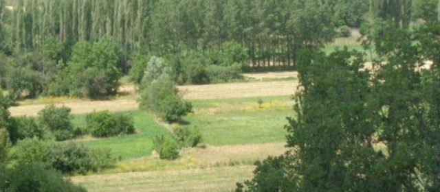 Silvoarable Agroforestry in Greece
