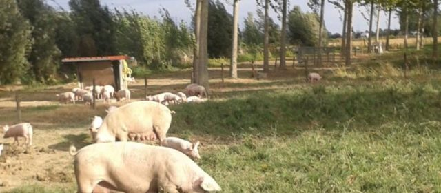 Agroforestry for Free-Range Pig Production in Veneto Region, Italy